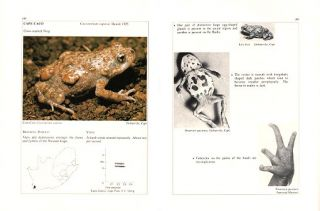South African frogs: a complete guide.