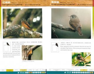 A photographic guide to birds of Hong Kong.