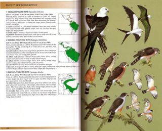 Raptors of the world: a field guide.