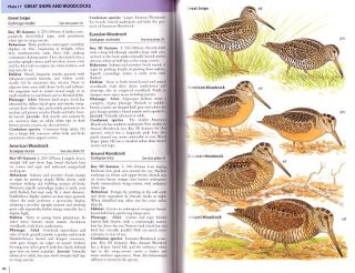 Field guide to the waders of Europe, Asia and North America.