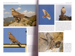 Birds of prey of the Indian subcontinent.