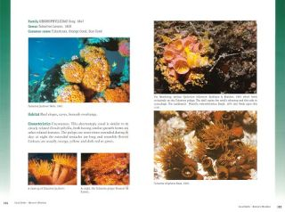 Coral reefs: nature's wonders.