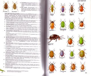 Insects of Britain and western Europe: Domino guide.