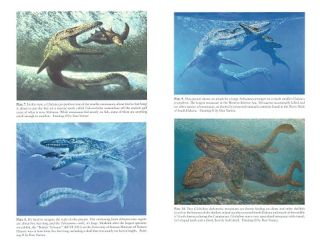 Oceans of Kansas: a natural history of the Western Anterior Sea.