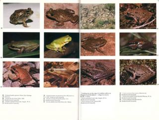 Frogs of the Northern Territory.
