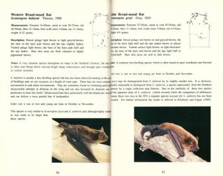 A field guide to the bats of the Northern Territory.