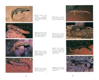 Skinks of the Northern Territory.