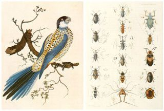 To sail beyond the sunset: natural history in Australia 1699-1829.