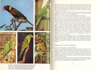 Lories and lorikeets: the brush-tongued parrots.