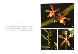 Orchids of Borneo, volume four.