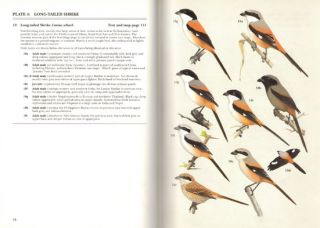 Shrikes: a guide to the shrikes of the world.