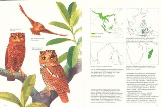 Owls of the world: their evolution, structure and ecology.
