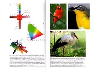 Bird coloration, volume one: mechanisms and measurements.