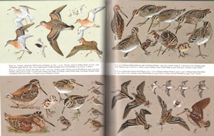 Handbook of the birds of Europe, the Middle East and North Africa. The birds of the Western Palearctic [BWP], volume three: Waders to gulls.