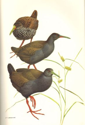 Rails of the world: a monograph of the Family Rallidae.