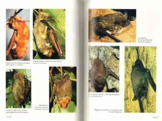 Mammals of the eastern United States.