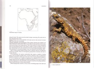 Lizards [two volumes].