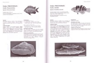 Otoliths of common Australian temperate fish: a photographic guide.