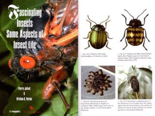 Fascinating insects: some aspects of insect life.