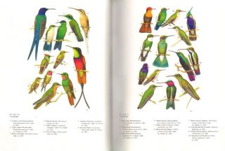 Birds in Brazil: a natural history.