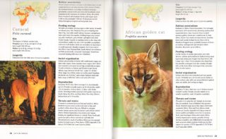 Cats of Africa: behaviour, ecology and conservation.