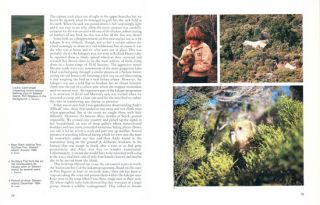 Quest for the Kakapo.