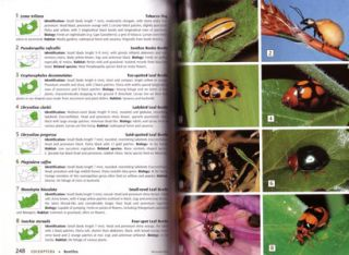 Field guide to insects of South Africa.