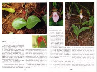 Native orchids of China in colour.