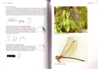The complete field guide to dragonflies of Australia.