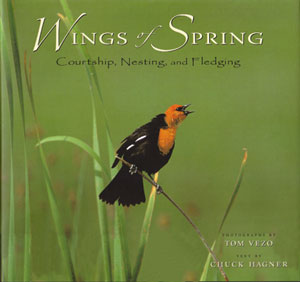 Wings of spring: courtship, nesting and fledging. Chuck Hagner.