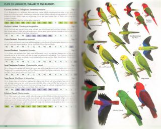 Birds of Melanesia: Bismarcks, Solomons, Vanuatu and New Caledonia.