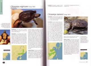 Turtles of the world.