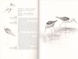 New Zealand Birds: an artist's field studies.