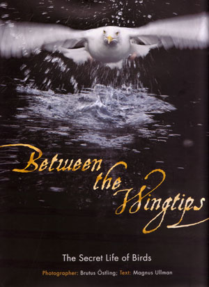 Between the wingtips: the secret life of birds. Magnus Ulman, Brutus Ostling