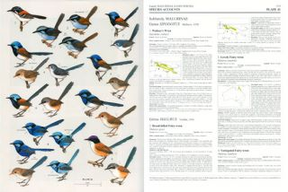 Handbook of the birds of the world [HBW], volume twelve: Picathartes to tits and chickadees.