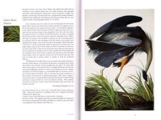 John James Audubon and the Birds of America: a visionary achievement in ornithology illustration.