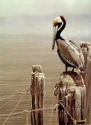 The art of Robert Bateman.