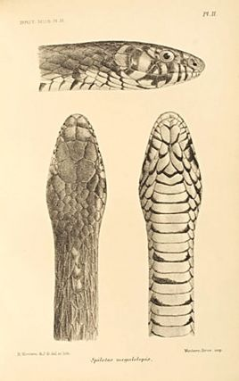 Catalogue of the snakes in the British Museum (Natural History).