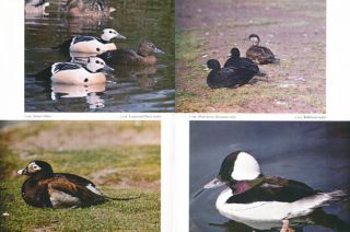 Waterfowl: their biology and natural history.