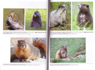 Squirrels: the animal answer guide.