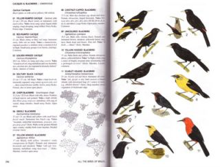 All the birds of Brazil: an identification guide.