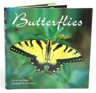 Butterflies. David Badger