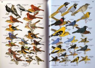 A field guide to the birds of Mexico and adjacent areas: Belize, Guatemala, and El Salvador.
