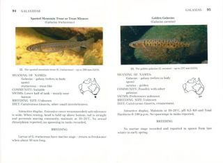 Australian native fishes for aquariums.