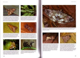 A guide to Australian moths.