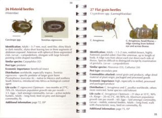 Insects of stored grain: a pocket reference.