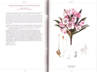 The illustrated Rhododendron: their classification portrayed through the artwork of Curtis's Botanical Magazine.