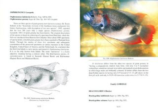 The fresh-water fishes of North Borneo.