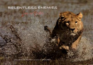 Relentless enemies: lions and buffalo. Dereck Joubert.