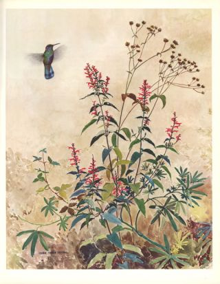 Portraits of Mexican birds: fifty selected paintings.